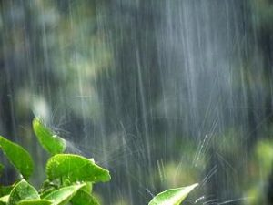 時雨 季節