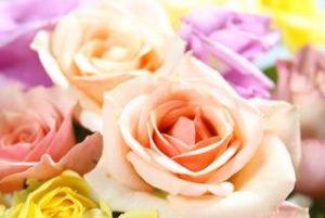 バラ 季節