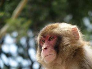 猿 バナナ
