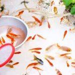 金魚すくいは英語で 説明する場合は?