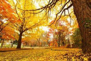 晩秋 いつ