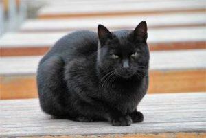 黒猫 目 緑