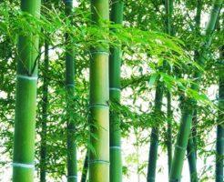 竹 季節 いつ 季語